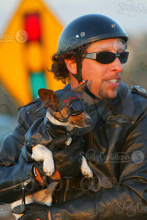 "Mar 26, 2003; Newport Beach, CA, USA; Two year old KIA BRUCE, a short legged, tri-colored smooth coat Jack Russell Terrior dog rides on her owners Harley. Kia has her own goggles, Harley riders vest and safety chain on the bike. Owner Rene Bruce got this 9.5"" tall terrior in Aguanga, CA in May 2001. Kia has her own website showcasing her agility ribbons and special events. Kiapet.com."