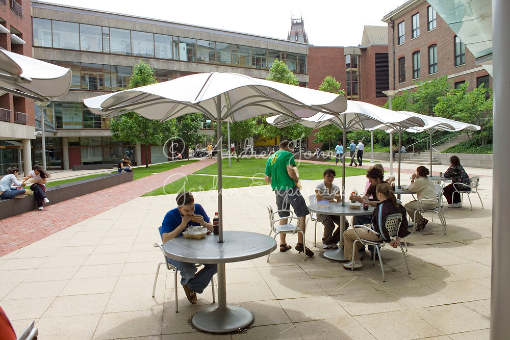 Landscaped courtyard public space with seating and parasols, mixed paving, lawns and ornamental trees<br /> <br /> The Lifesciences Building, Harvard University, Cambridge, MA, USA<br /> <br /> Landscape design: Reed Hilderbrand