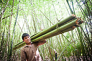 Bamboo Forest Workers in Ban Don Laos