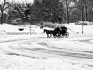 Horse carriage in the snow at Cherry Hill in Central Park.