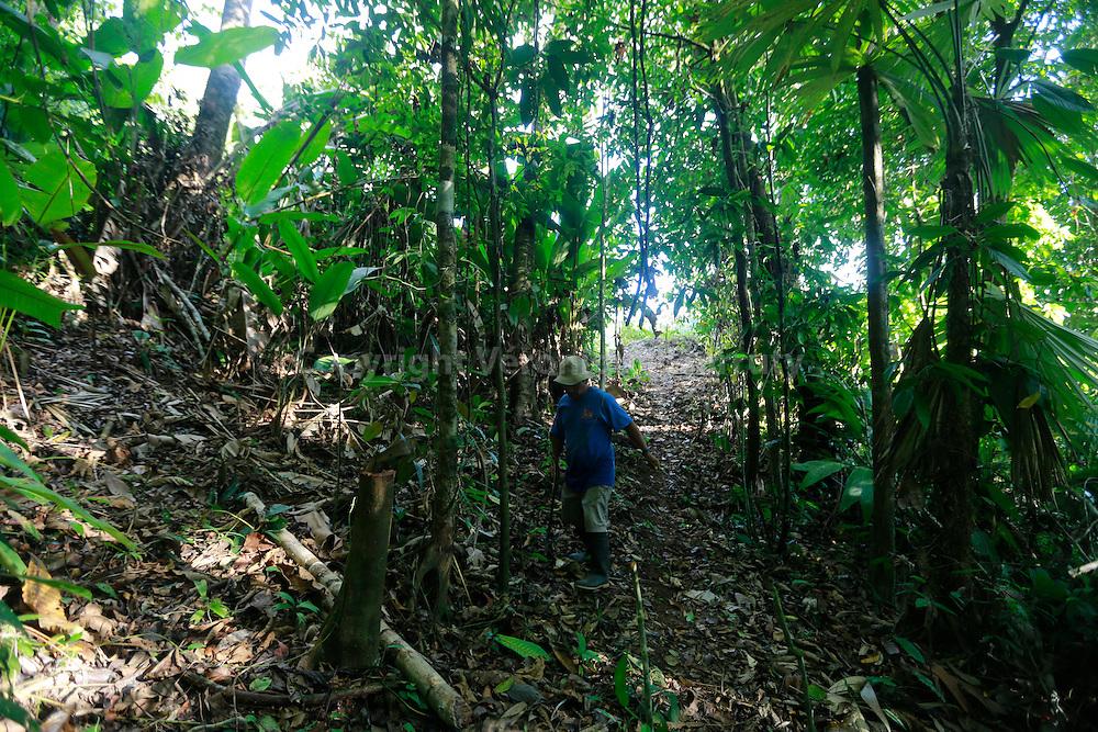 cutting the palm leaves for the houses, Guaymi native reserve, Osa Peninsula, Costa Rica // Preparation des feuilles de palme avec lesquelles les toits des maisons sont fabriquées, Reserve indigene Guaymi, Peninsule de Osa, Costa Rica