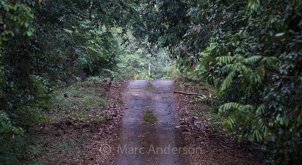 Access road cutting through rainforest, Taman Negara National Park, Malaysia
