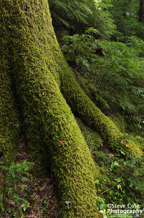 Mossy Feet - Mount Rainier National Park