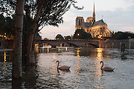 Paris . Flooding . The Seine river at the quay de la Tournelle , in the distance Notre dame cathedral
