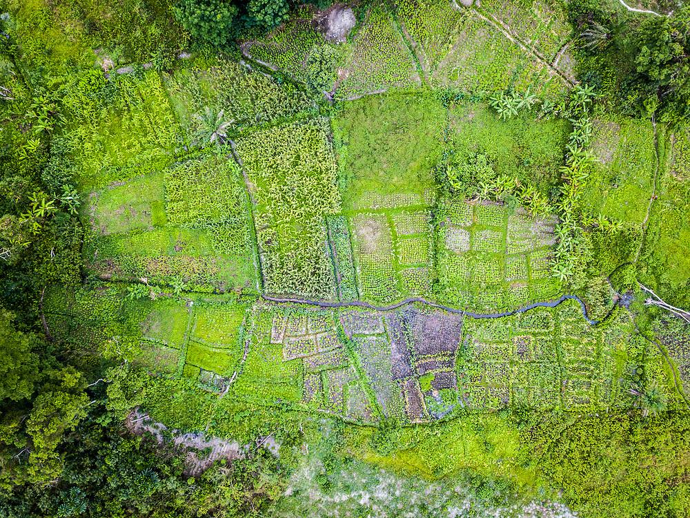 Aerial shot of a farm in Ganta, Liberia