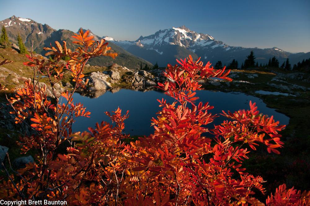 Fall; Mt. Baker Wilderness Area; North Cascades; WA; Yellow Aster Butte, Mountain Ash
