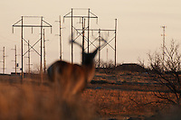 POWER LINES WITH A BUCK IN THE FOREGROUND