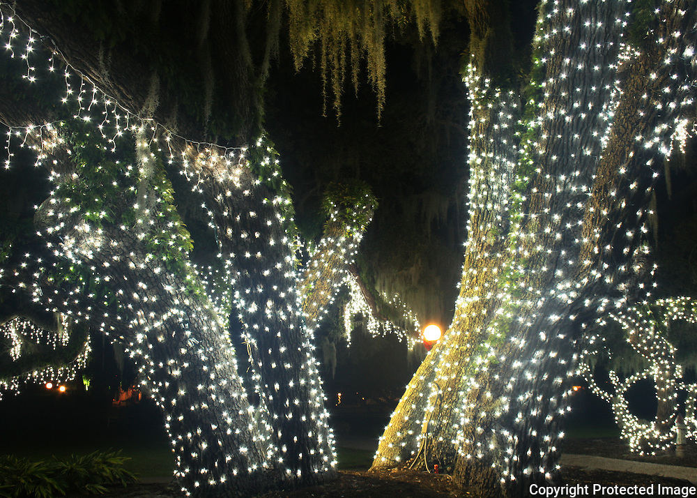 White Christmas lights on giant oaks at Jekyll Island at the Jekyll Island Historic District.