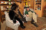 """Dieter Kraml with his brown bear Hera in the cozy living room in his """"Leisure Centre"""" for bears. He lives together with 8 adult Brown Bears in almost family atmosphere. As a zookeeper,  with  20 years, he bring up his first  Brown Bear. After that, he never let go of bears. He trains his bears, and from time to time they also to be used in film and television. He is involved for species conservation-  bear protection and environmental projects. Dieter Kraml lives in his own world of bears. Alfeld, Germany / Dieter Kraml mit seiner Braunbaerin Hera im gemuetlichen Baerenwohnzimmer in seiner """"Freizeithalle"""" fuer Baeren. Er lebt mit 8 ausgewachsenen Braunbaeren in fast familiaerer Atmosphaere zusammen. Als Tierpfleger zog er mit 20 Jahren seinen ersten Braunbaeren auf. Danach konnte er von Baeren nicht mehr lassen. Er trainiert seine Baeren, und so kommen sie auch ab und zu in Film und Fernsehen zum Einsatz. Er engagiert sich fuer Arten- sprich Baerenschutz und Umweltschutzprojekte. Dieter Kraml lebt in seiner eigenen Baerenwelt. Alfeld, Deutschland"""
