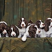 Puppies have their first portraits taken, July 17, 2011.  Photography by Melody Carranza.