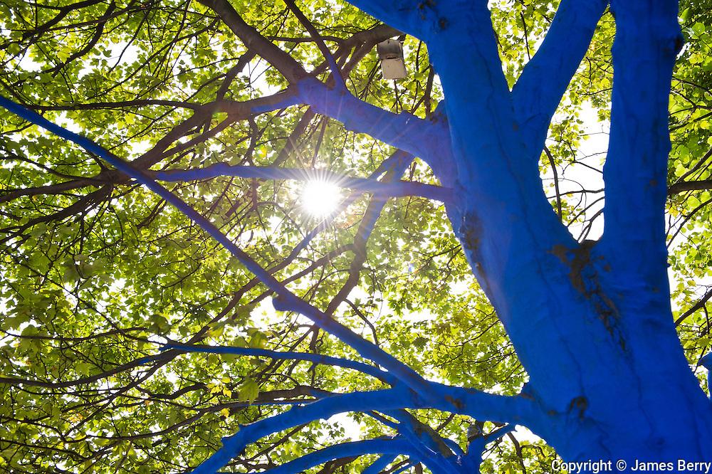 Blue Trees @ St Paul's.
