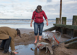 Last night storm Angus swept away Cressida, the Portobello tidal octopus. Fortunately she didn't swim too far and this afternoon when the tide retreated the artist, Lauren Fox, and a few others rescued her from the sand before the tide swept in again.<br /> &copy; Jon Davey/ EEm