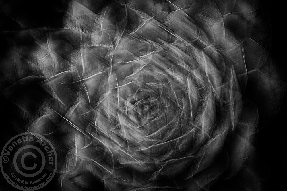An abstract close-up of a succulent rosette.