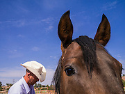"14 JULY 2012 - FT DEFIANCE, AZ:  A man works with a horse during a horsemanship clinic at the 23rd annual Navajo Nation Camp Meeting in Ft. Defiance, north of Window Rock, AZ, on the Navajo reservation. Preachers from across the Navajo Nation, and the western US, come to Navajo Nation Camp Meeting to preach an evangelical form of Christianity. Evangelical Christians make up a growing part of the reservation - there are now more than a hundred camp meetings and tent revivals on the reservation every year. The camp meeting in Ft. Defiance draws nearly 200 people each night of its six day run. Many of the attendees convert to evangelical Christianity from traditional Navajo beliefs, Catholicism or Mormonism. ""Camp meetings"" are a form of Protestant Christian religious services originating in Britain and once common in rural parts of the United States. People would travel a great distance to a particular site to camp out, listen to itinerant preachers, and pray. This suited the rural life, before cars and highways were common, because rural areas often lacked traditional churches.   PHOTO BY JACK KURTZ"