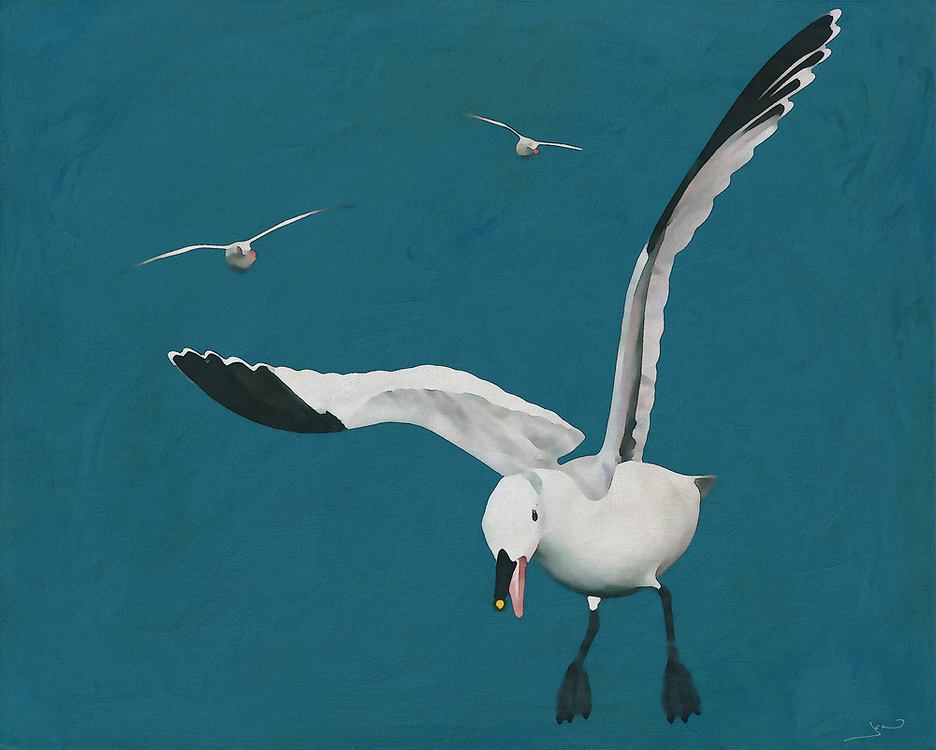 These Sabine Seagulls are truly a dazzling sight to behold. This image of Sabine Seagulls in flight has the wonderful ability to transport you to your own destination by the sea. Doesn't a vacation by the ocean sound absolutely lovely right now? This scene by Jan Keteleer makes one think of the outdoors, vacations, and the chance to travel. -<br />
