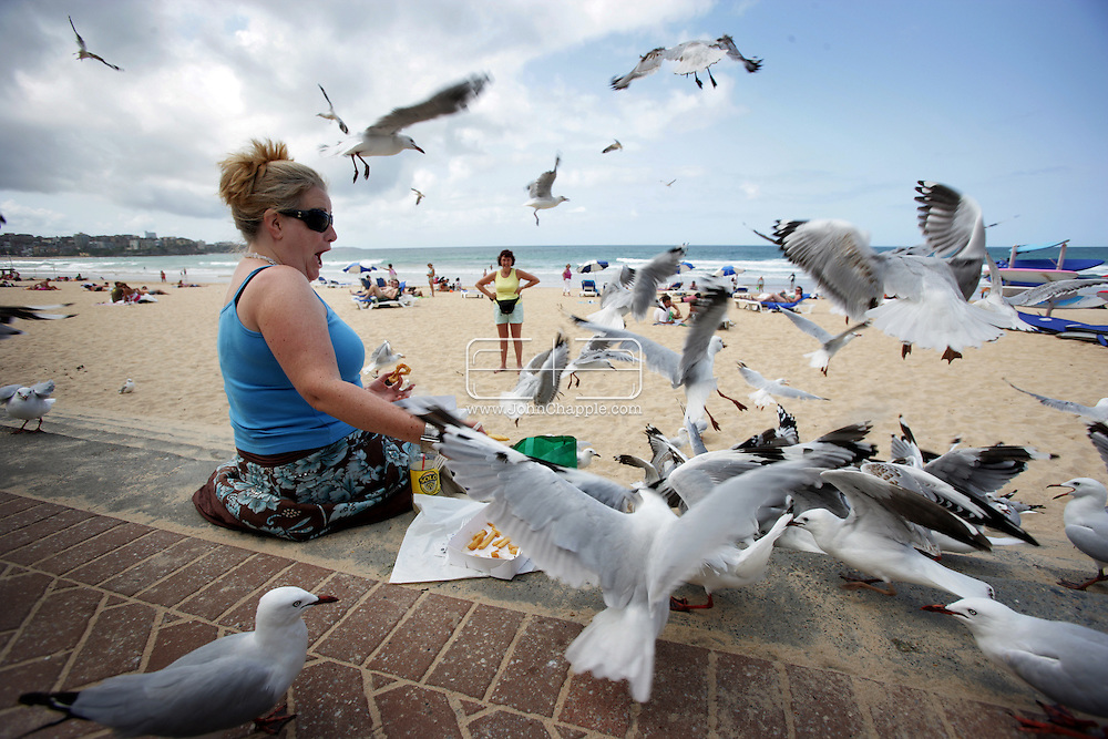 8th February 2007. Sydney, NSW. Siobhan O'Gorman is overwhelmed by seagulls on Manly beach, as she tries to eat her lunch. In a hope to solve the problem there are plans to introduce birds of prey to the busy area. PHOTO © JOHN CHAPPLE / REBEL IMAGES. .tel 310 570 9100.john@chapple.biz.www.chapple.biz.