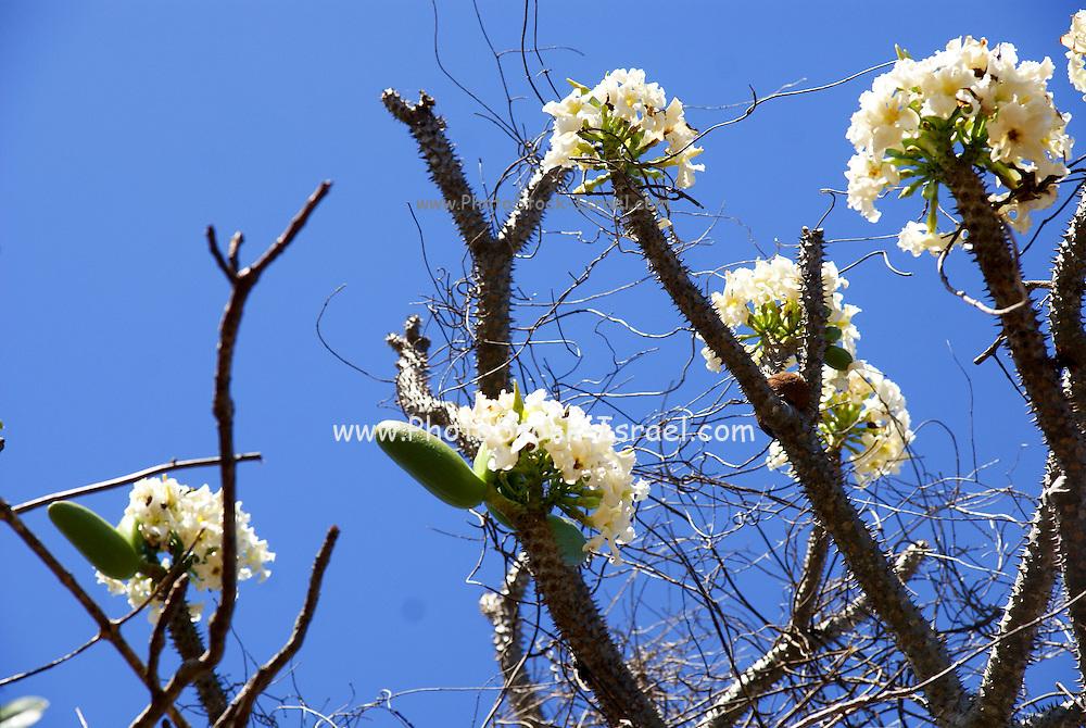 Madagascar, Northern Madagascar, Antsiranana (Diego-Suarez)