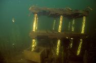 Underwater Scene-Fish crib<br /> <br /> ENGBRETSON UNDERWATER PHOTO