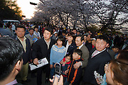 Yeouido Island. Hundreds of Thousands of Seoulites enjoy the Cherry Blossom in Yunjungno, the street around the National Assembly lined by cherry trees which has been cleared from traffic for these days. Seoul City Mayor Lee Myung-bak (light grey suit) poses with fans.