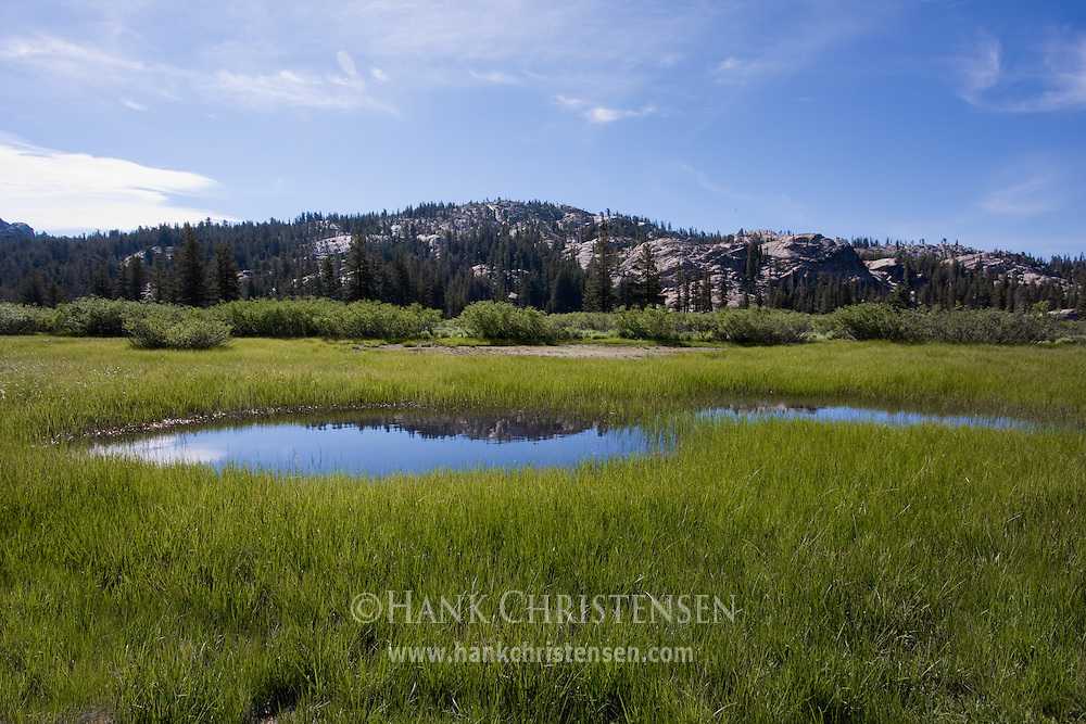 A small pool sits amongst the green grass of a marshy meadow, Emigrant Wilderness, California