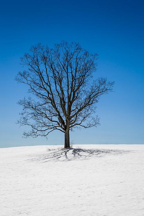 Sky, Tree, Hill