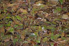 Potamogetonaceae, Fonteinkruidfamilie,