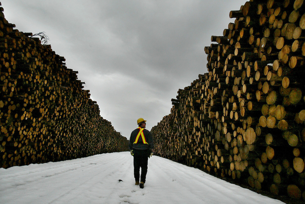 An Abitibi consolidated employee makes his way down the center of road covered on the both sides with logs. The waste from the cuts make up the newsprint.