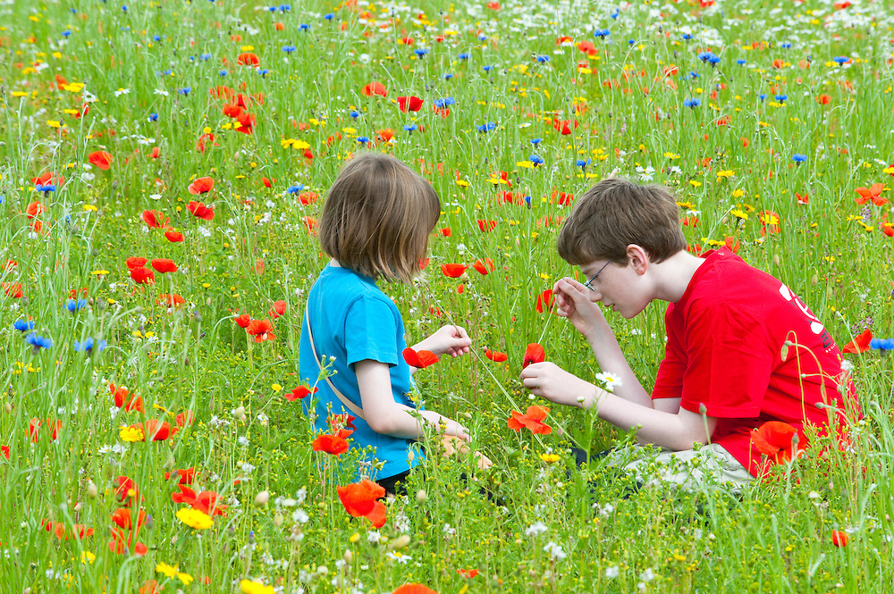 Children in a wildflower meadow,  Scotland