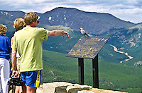 Tourist observing a Clark's Nutcracker at Rainbow Curve along Trail Ridge Road.  Rocky Mountain National Park, Colorado.