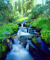 I captured the vibrant green and blue colors in my photo of this lush mountain stream in Sky Meadows in the Sierra Nevada Mountains.