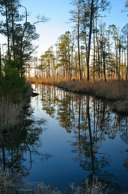 Trees reflecting on water, Blackwater National Wildlife Refuge, Cambridge, Maryland, USA.
