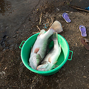 Kenya. Mbita on shore of Lake Victoria. Homa Bay county. Two Nile perch in a green bowl next to purple flipflops