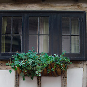 Window and ivy in Tudor building, Sandwich, Kent, England