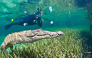 Mangroves Seagrass Crocodiles