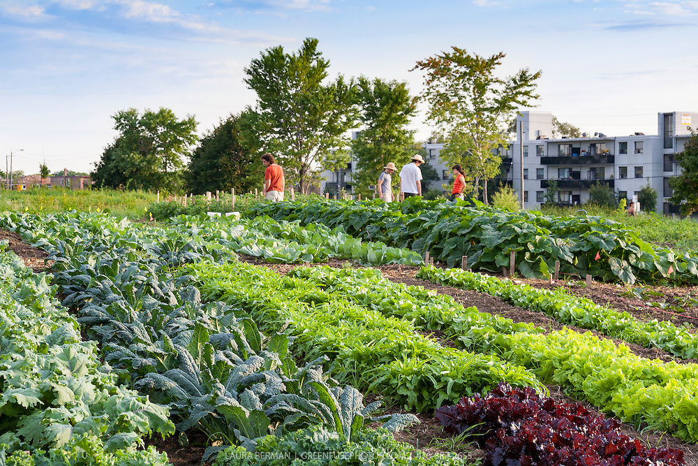 Farm workers at an urban farm in Toronto's Downsview Park.