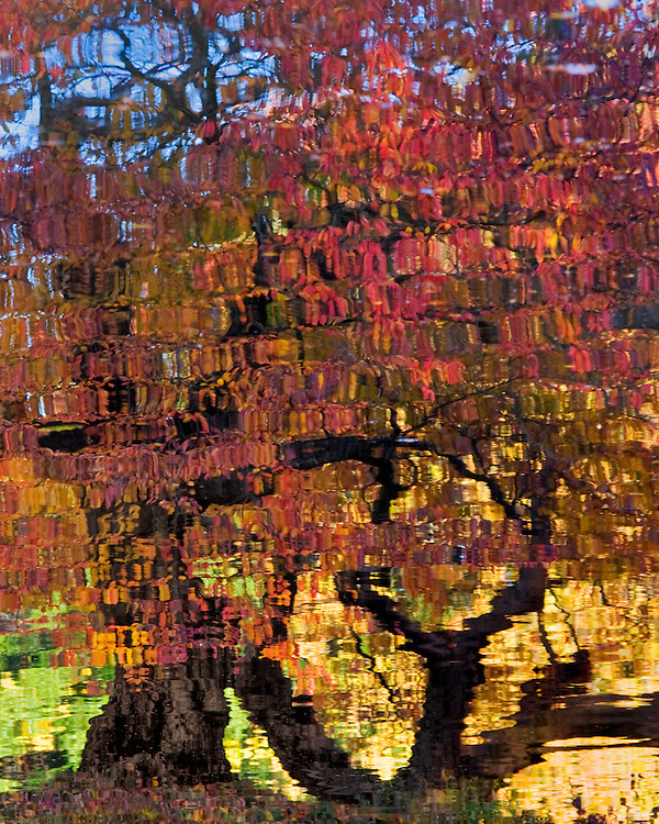 Nomahegan Park Fall Reflection