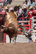A bull rider is tossed during Bull Riding competition at the Cheyenne Frontier Days rodeo at Frontier Park Arena July 23, 2015 in Cheyenne, Wyoming. Frontier Days celebrates the cowboy traditions of the west with a rodeo, parade and fair.
