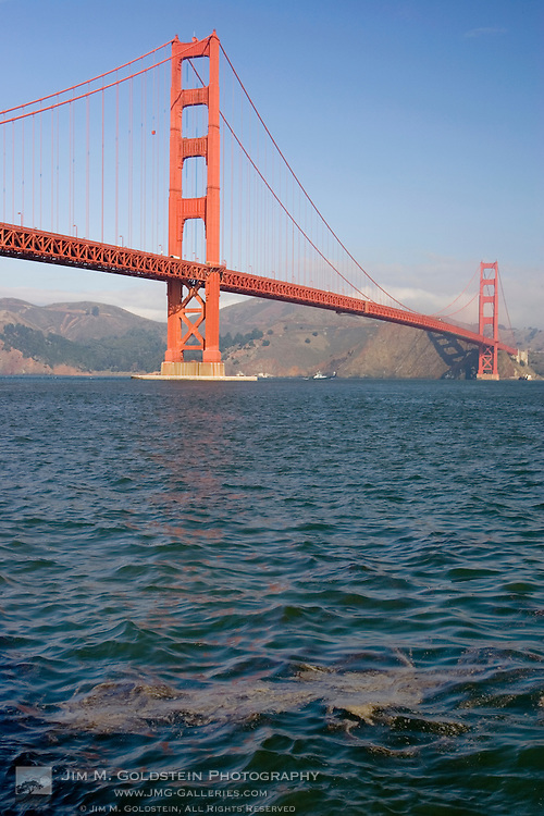 Bunker fuel, from the November 7, 2007 oil spill,  floats in the San Francisco bay near Fort Point in front of the San Francisco Gate Bridge.