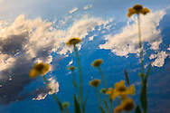 The sky is reflected in a Sierra Mountain lake behind wildflowers ? the clean air, blue water and green land that citizens want without the fire that is required to maintain it in California's fire adapted ecology.