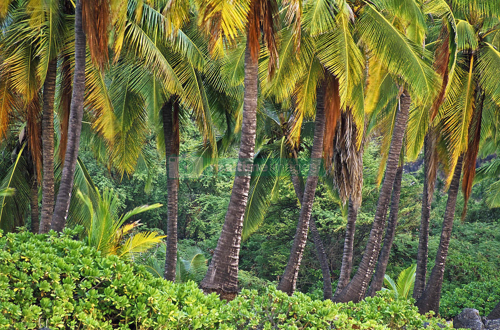 July 21, 2019 - Palm Trees (Credit Image: © Bilderbuch/Design Pics via ZUMA Wire)