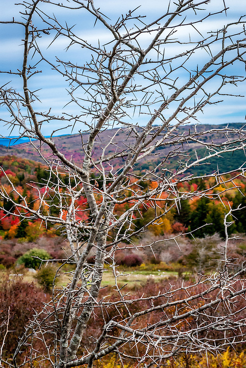 In this image a locust tree on the Appalachian Trail in Grayson Highlands State Park creates an intricate abstract picture frame for the fall foliage on Wilburn Ridge. It reminds me of an abstract stained glass window.