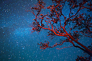 Ohia Tree, Milky Way, Kilauea Volcano; HVNP; Hawaii Volcanoes National Park; The Big Island of Hawaii; night; stars; star