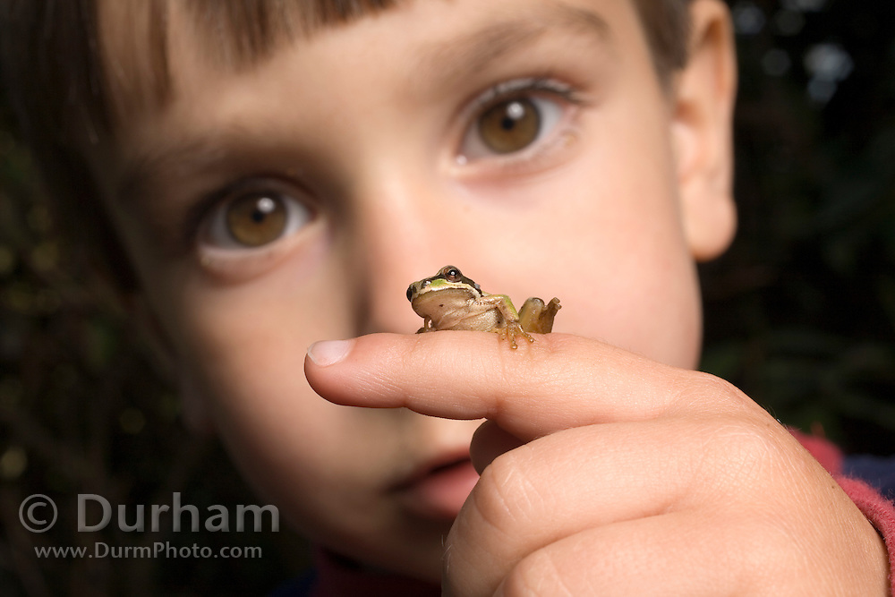 A three year old boy with a pacific treefrog (Pseudacris regilla). Full released. #21205Ian