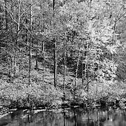Bald River Calm Stream Fall Color Reflection - Infrared Black & White