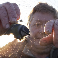 15/11/10 Spurn Head , East Yorkshire - Paul Collins , bird ringer at the Surn Bird Observatory