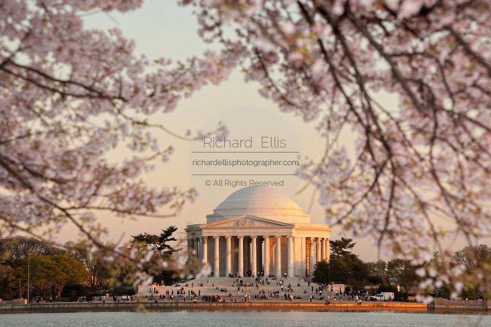 Cherry tree blossoms along the Tidal basin with the Jefferson Memorial at sunset in Washington, DC.