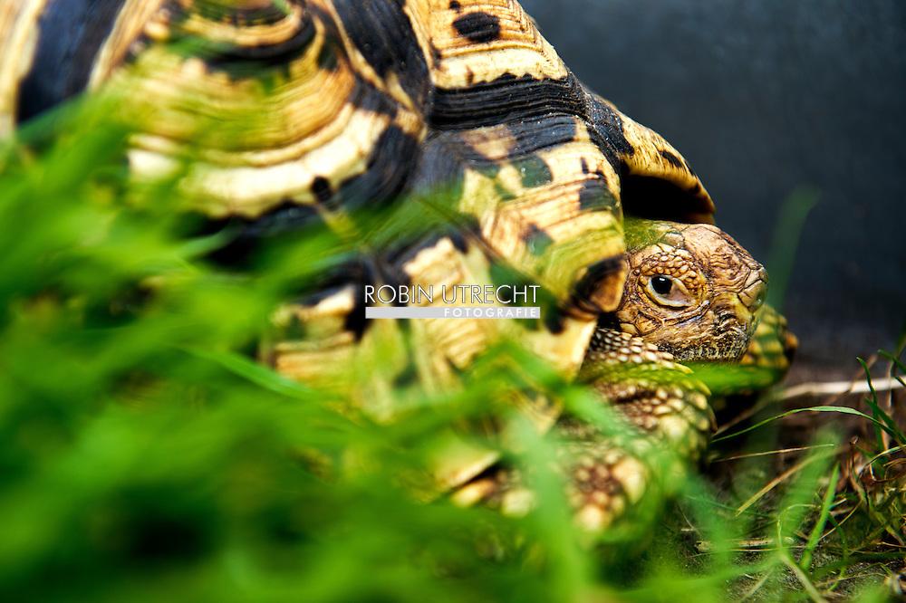 RODEN - Exotische schildpadden robin utrecht fotografie