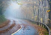 Rural road, in autumn mist Massachusetts, USA.