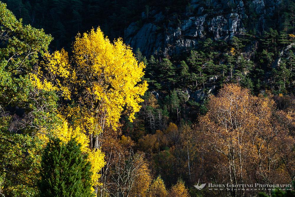 Imsvatnet, Sandnes, Norway. Colourful autumn colours.
