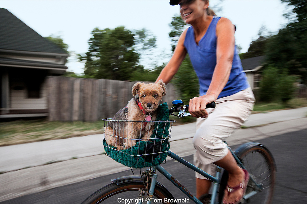 Pet in the front basket of the owner's bicycle